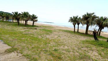 【白浜海水浴場】青島で観光も楽しめる!ビロウ樹と海の家がある海水浴場