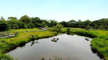 【高鍋湿原】世界最小のトンボ「ハッチョウトンボ」が生息している湿原