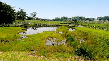 【川南湿原植物群落】日本で絶滅した「ヒュウガホシクサ」の自生地